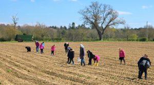 Rendlesham Primary School fieldwalking in 2019